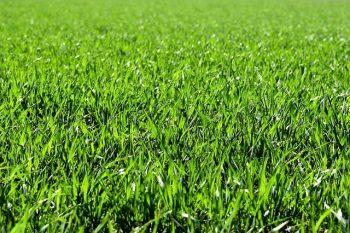 Graszoden leggen of zelf gras zaaien