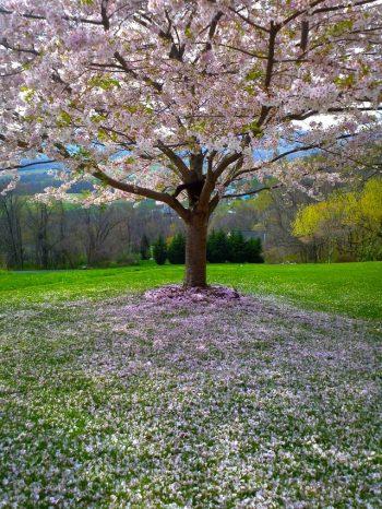 liefde voor je tuin