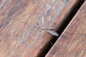 Insecten tegengaan is best makkelijk ho(o)r