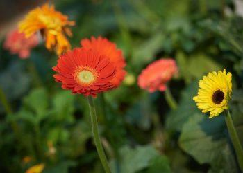 inspiratie grote tuin