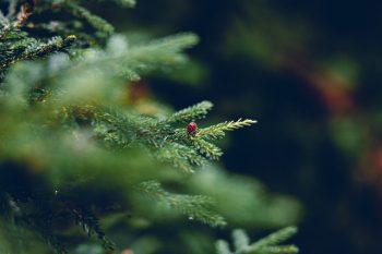 kerstkriebels